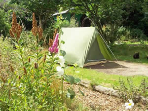 Organic Holidays - Alde Garden Tent Pitches Low Road Sweffling. IP17 2BB & Organic Holidays Alde Garden Tent Pitches Five Small Tent ...