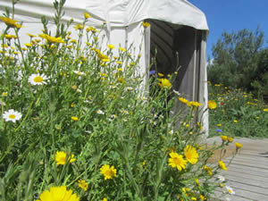 Organic Holidays - Chilled Glamping, Mill Haven Place, Middle Broadmoor. SA62 3XD