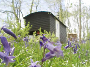 Organic Holidays - Sussex Shepherds Huts, Quarry Farm, Bodiam. TN32 5RA