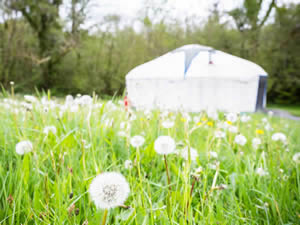 Organic Holidays - The Yurt Farm, Crynfryn Organic Farm, Penuwch. SY25 6RE