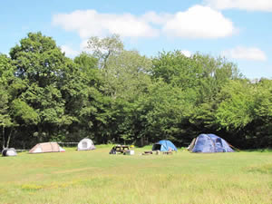 Organic Holidays - Wild Camping in Sussex, Wimbles, Vines Cross. TN21 9HA
